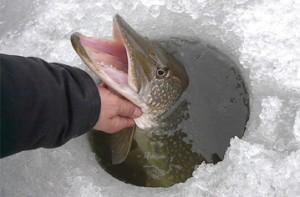pescuit la copca 2